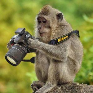 کانال دنیای حیوانات