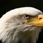کانال عقاب پیر