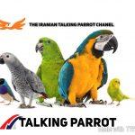 کانال The iranian talking parrot