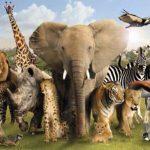 کانال انیمال تیوی (حیوانات)