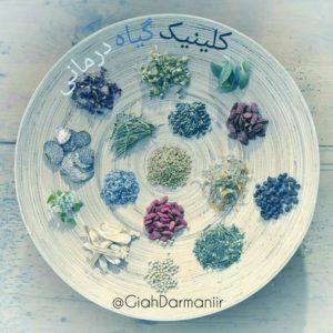 کانال کلینیک گیاه درمانی