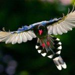 کانال تلگرام ی به دنیای پرندگان