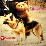 کانال تلگرام عروسک ایرانی