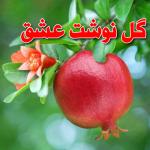 کانال تلگرام گل نوشت عشق