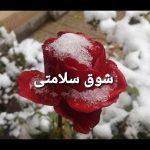 کانال تلگرام شوق سلامتی