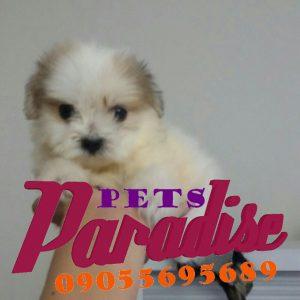 کانال تلگرام خرید و فروش انواع حیوانات